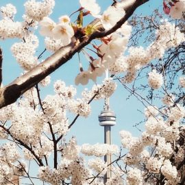 Toronto Income Property Newsletter – May 2017