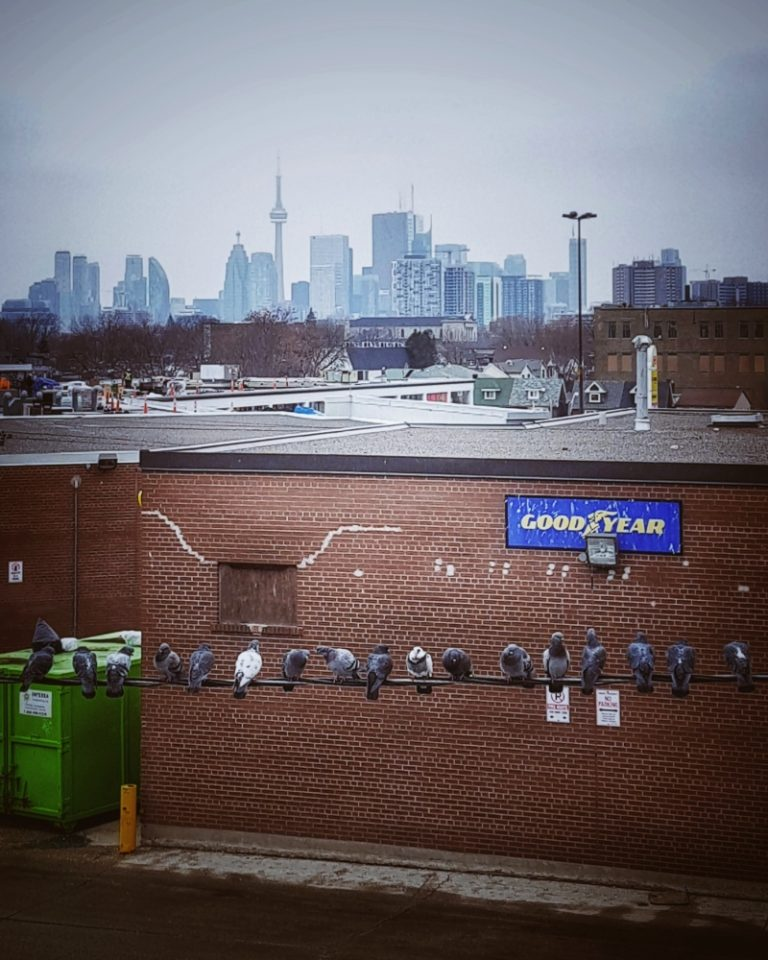 Toronto Income Property Newsletter – January 2020