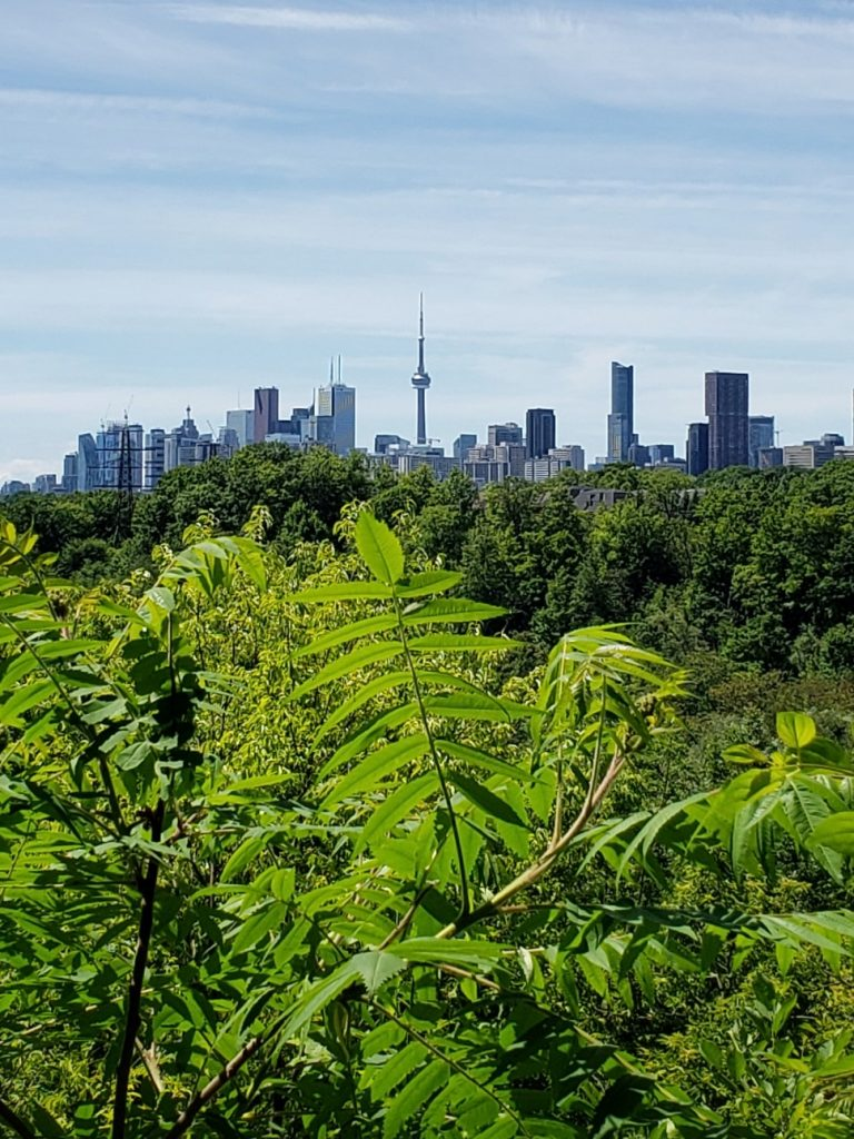 Toronto Skyline from Crothers Woods